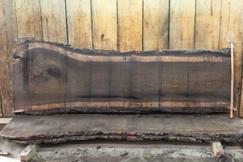 "446 Walnut -10 2"" x 32"" x 24"" Wide x 8' Long"