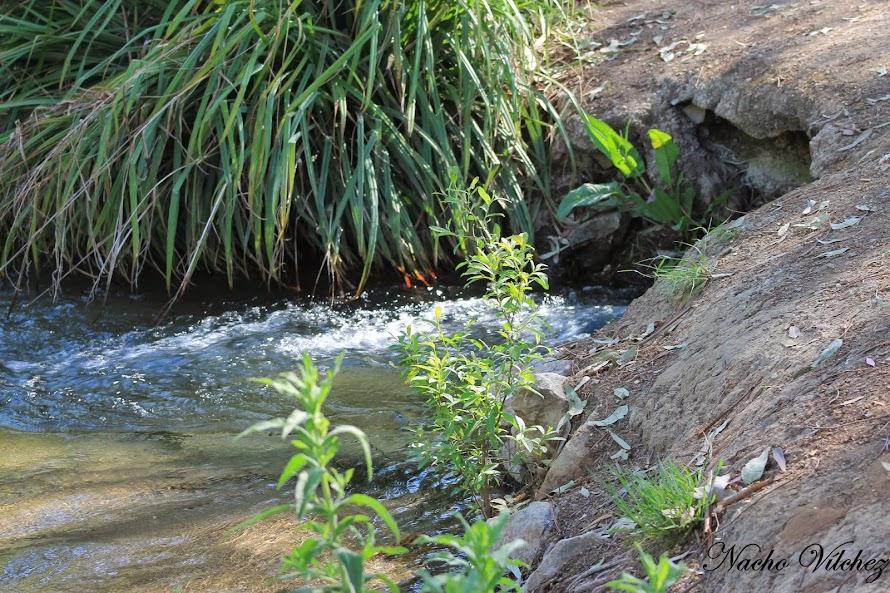 Río Frío y arroyo Salado 12.04.14 (6/6)