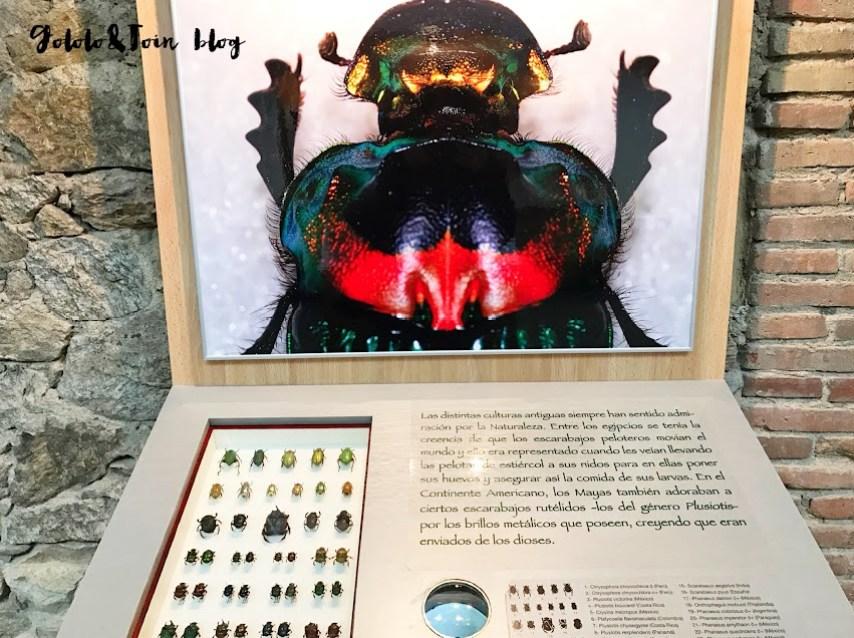 insectpark-insectos-centro-naturaleza-ocio-familia