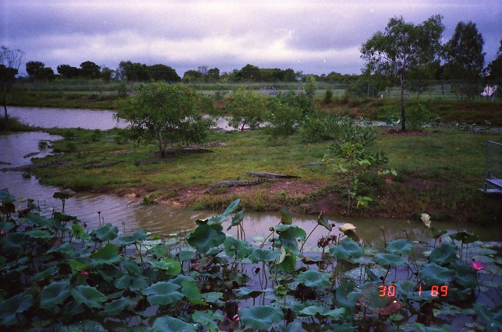 0530NT Crocodile Farm