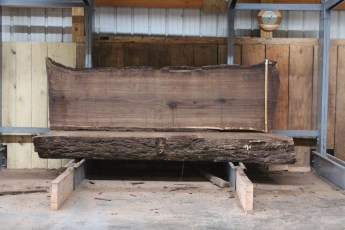 "581  Walnut -4 10/4 x 31"" x  28"" Wide x  8'  Long"