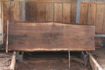 "556  Walnut -4 10/4 x  33"" x  29"" Wide x 8'  Long"