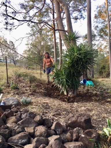 planting-dracena-2017-10-7-10-17.jpg