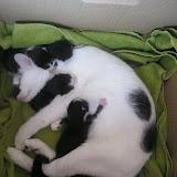 katten - 2011-02-27%2B11-41-36%2B-%2BIMG_0282.JPG