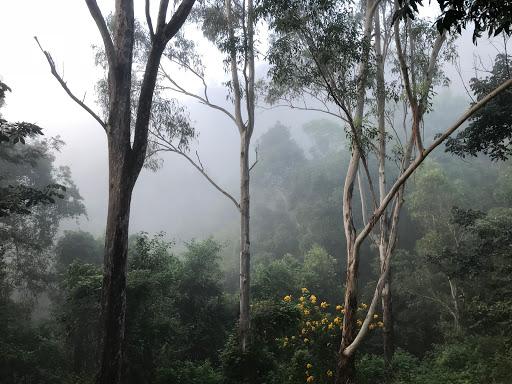 20180415-fog2-2018-04-15-07-07.jpg
