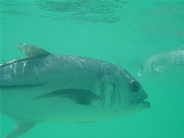 Snorkling vid Xel Ha