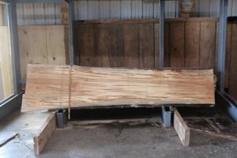 "567  Maple Ambrosia -2 10/4x 30"" x 23"" Wide x  10'  Long"