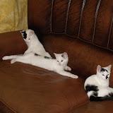 katten - 2010-07-09%2B23-14-47%2B-%2BDSCF1369.JPG