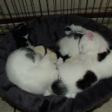 katten - 2010-06-20%2B13-05-34%2B-%2BDSCF1298.JPG