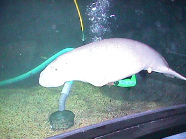 1180Electric Eel