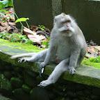 0368_Indonesien_Limberg.JPG