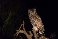 one of the few sightings during a night drive