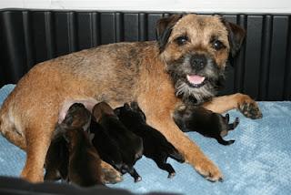 ZZ puppies 1 day