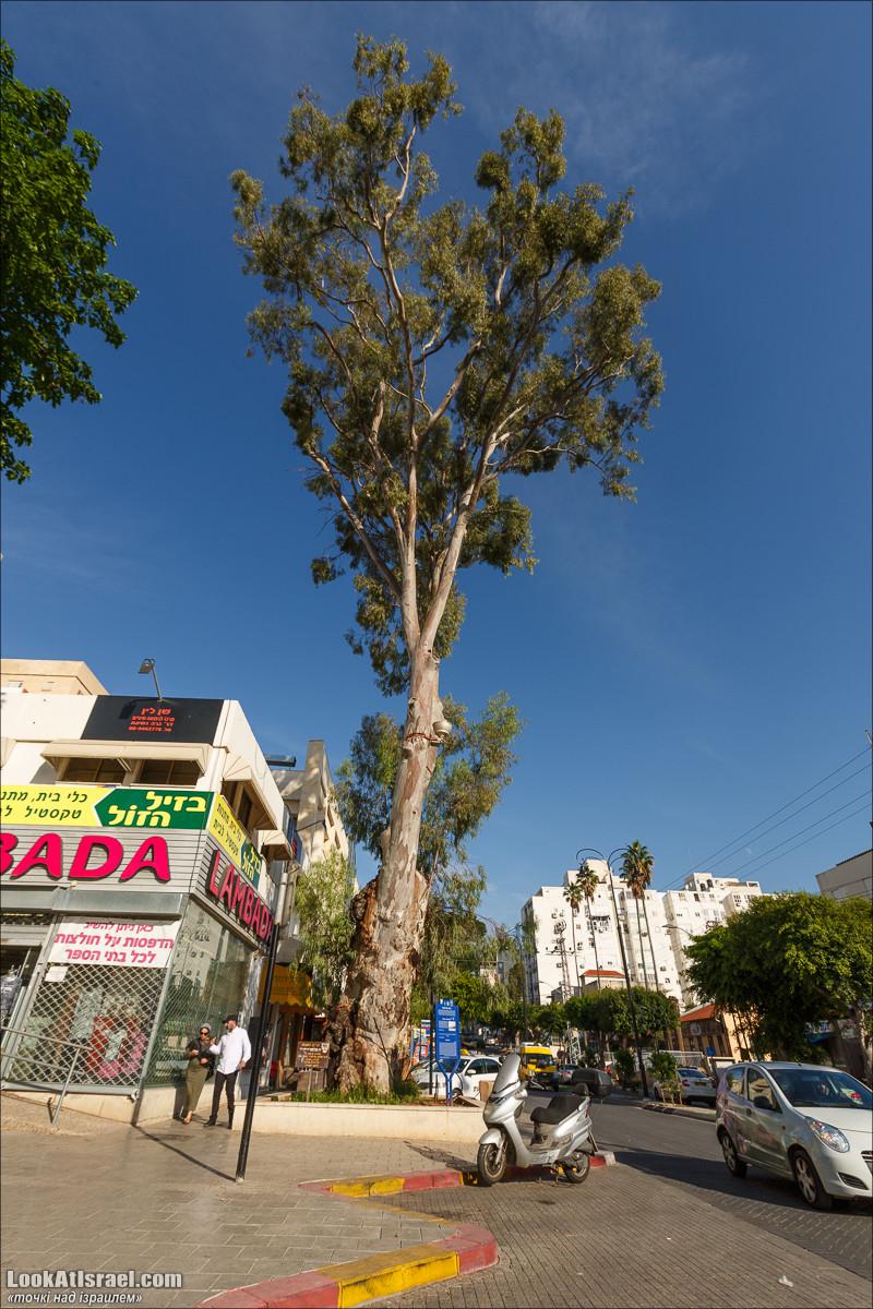 Серия рассказов о городах Израиля «Точки над i» - Реховот   Points over Israel - Rehovot   LookAtIsrael.com - Фото путешествия по Израилю
