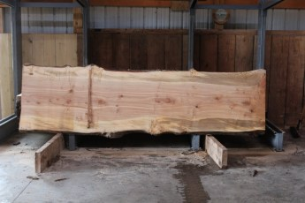 "564  Hard Maple Curly Burly -4 10/4x 38"" x 33"" Wide x  11'  Long"