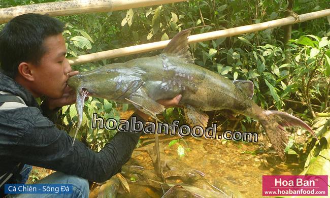 Cá Chiên - Sông Đà - Goonch Fish - 6