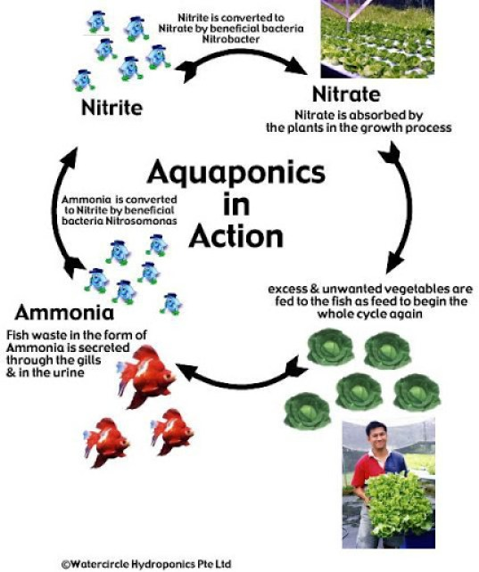 Aquaponics diagram 6