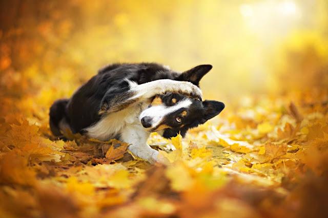 Поведение собаки во время первой течки