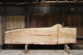 "601  Ambrosia Maple - 3 8/4x 37"" x 24"" Wide x  10'  Long"