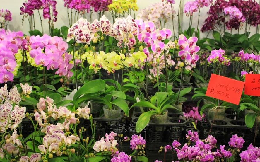 2015 台灣國際蘭花展時間-7