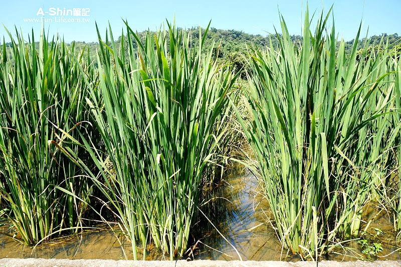 桃米休閒農業區3