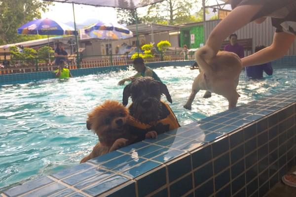 香港狗泳池