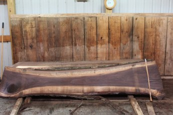 "465 Walnut -1 2"" x 25"" x 19"" Wide x 10' Long"