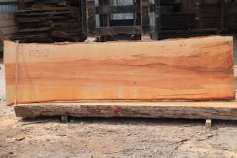 Hard Maple 155-7  Length 10' Max Width (inches) 34 Min Width (inches) 29 Notes 10/4 Some Curly Figure, LOTS of color Kiln Dried