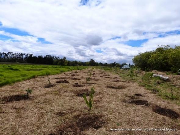 Plantación en el bosque de la Marcedes