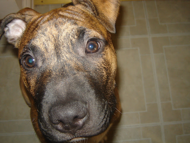 %name Healthiest Dog Food For Pitbulls