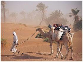 عطر الصحراء