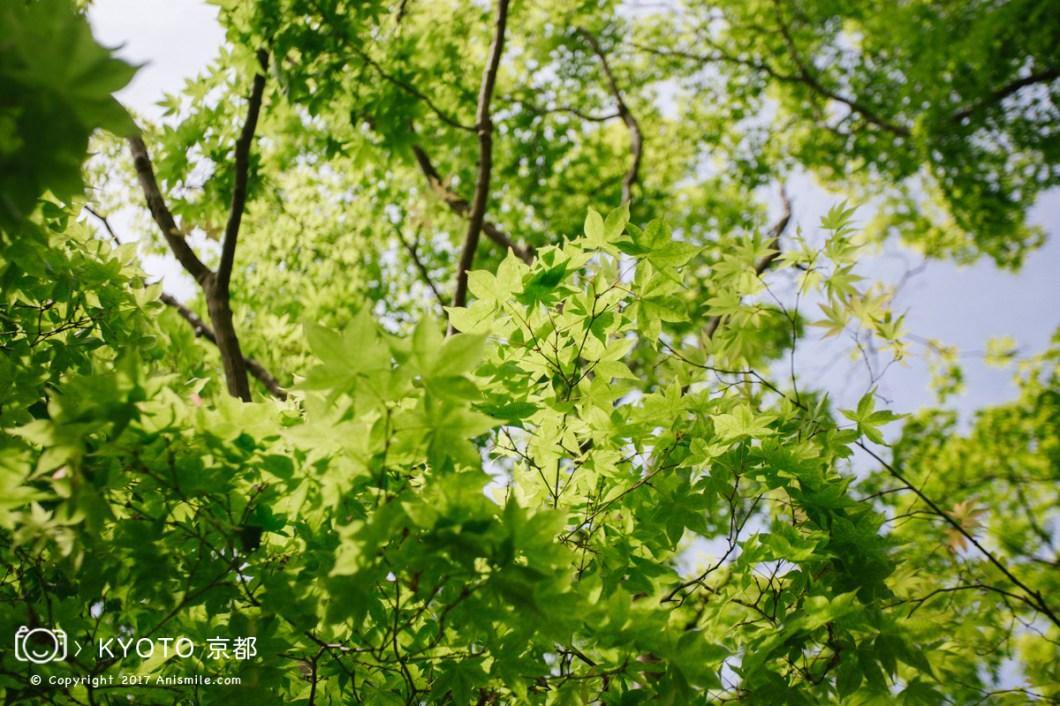 photo-26