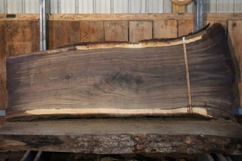 "549  Walnut -7 10/4 x  44"" x  28"" Wide x 8'  Long"