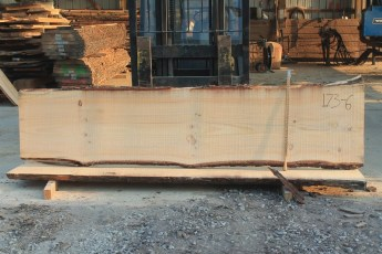 White Pine 173-6  Length 10' Max Width (inches) 27 Min Width (inches) 24 Notes 10/4