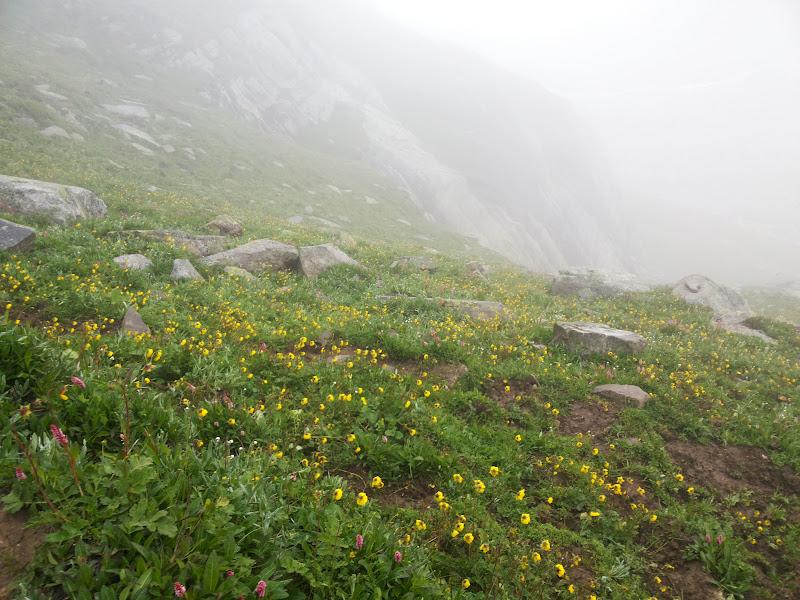 Colorful flowers on the way to Balu ka Ghera
