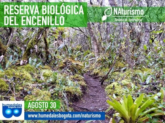 Caminata a la Reserva Biológica del Encenillo