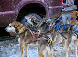 Iditarod2015_0032.JPG