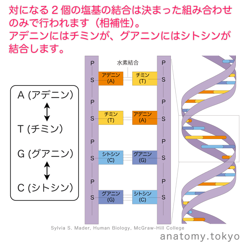 t112-26-相補性.png