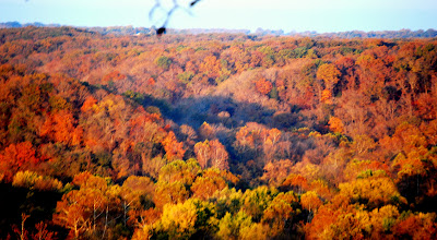 Clifty Creek Hollow from the Bluff