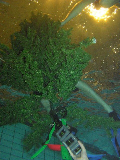 Julen är slut. Granen bäres ut. Foto: Mats Wallin