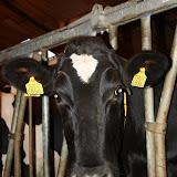 BVA / VWK kamp 2012 - kamp201200069.jpg