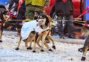 Iditarod2015_0371.JPG
