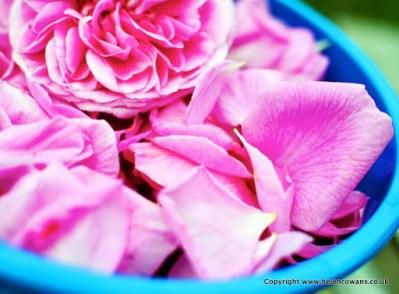 1 Rose petals