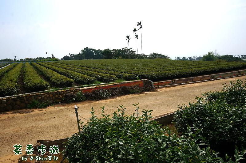 茶香步道13