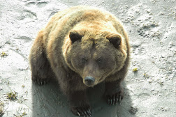 Bear Enclosure WCC - Patron  4.JPG