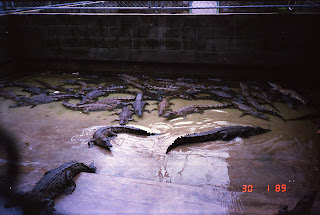 0540NT Crocodile Farm