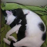 katten - 2011-02-27%2B11-41-46%2B-%2BIMG_0283.JPG