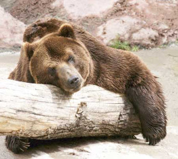 медведь у манси
