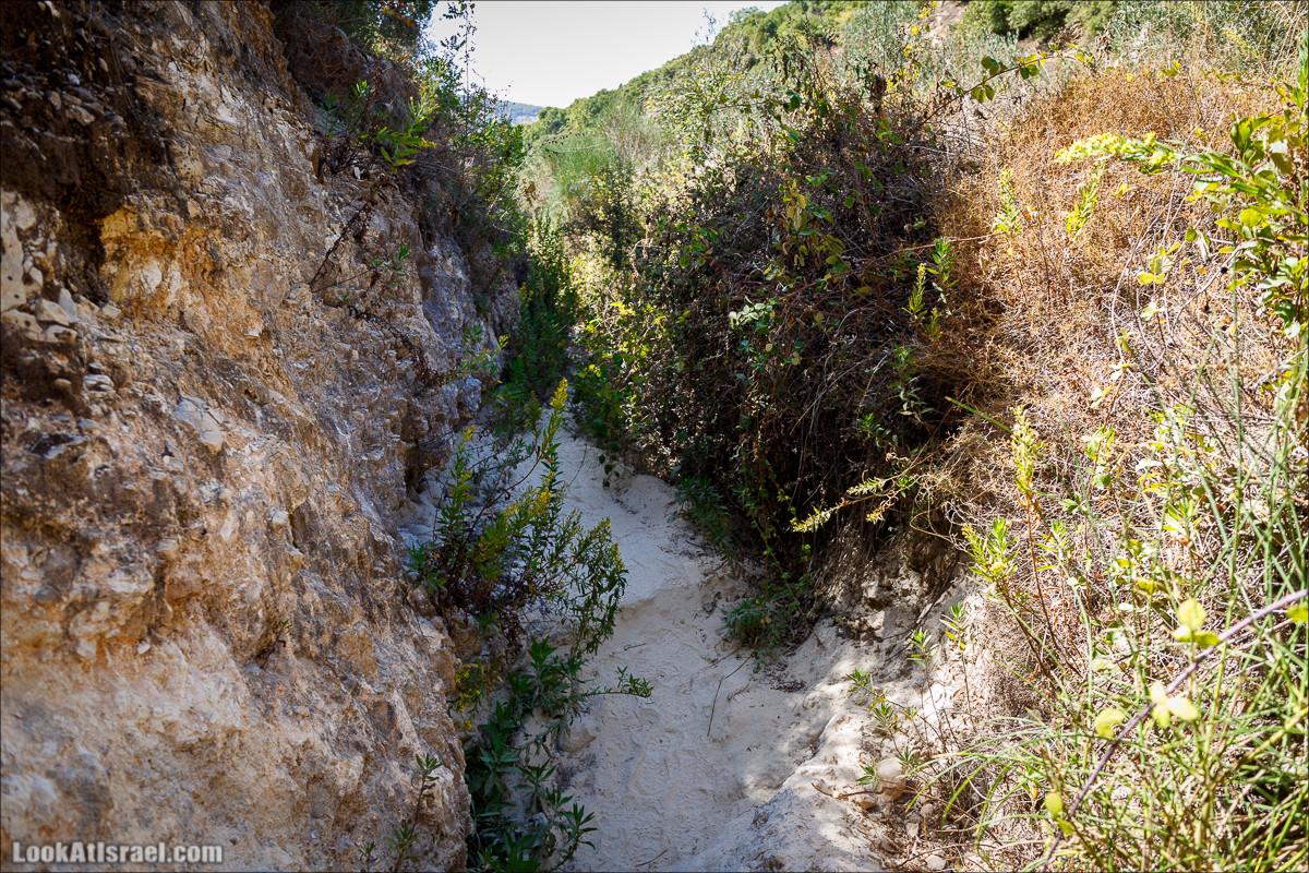 Моран - калиновые джунгли | Nahal Moran | נחל מורן | LookAtIsrael.com - Фото путешествия по Израилю
