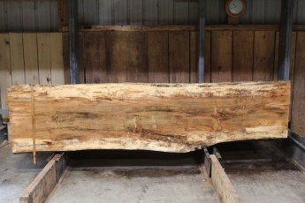 """610 Maple Spalted - 4 10/4x 31"""" x 27"""" Wide x  10'  Long"""